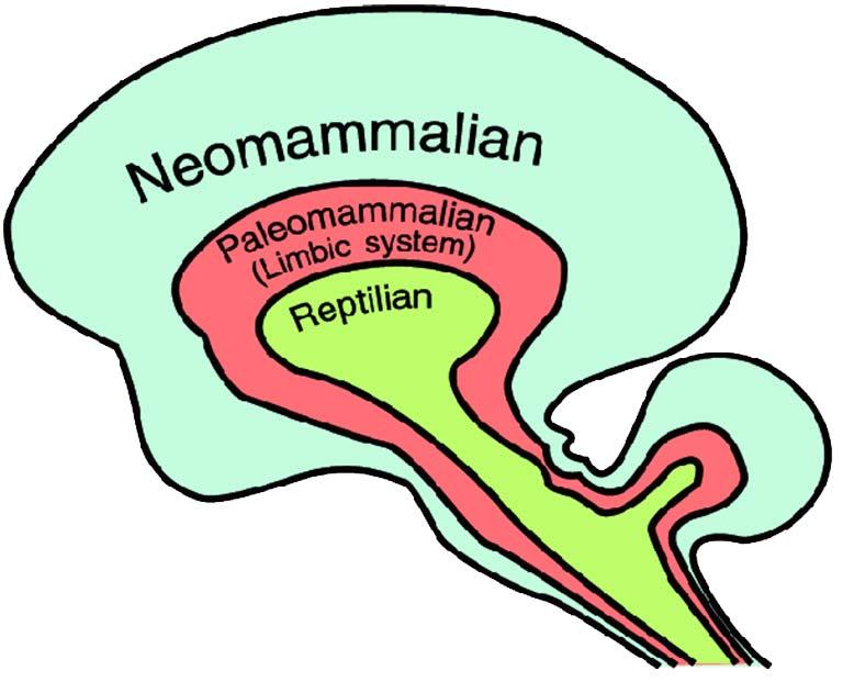 המבנה המשולש של המוח - פול מקלין